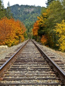 Fall colors botder train tracks in Wolf Creek, Oregon about 25 miles North of Grants Pass, OR