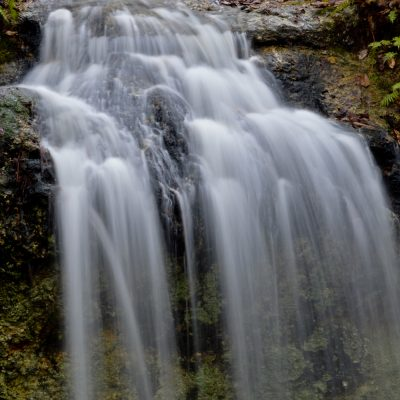Falling Waters State Park is home to the largest waterfall in Florida.