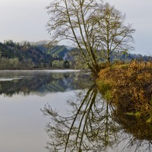Scenes of the Smith River about 25 miles of Reedsport, Oregon.